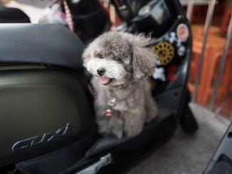 andrew shiau PqiOXMaz1D0 unsplash 326x245 - Sikker kørsel med kæledyr i din bil