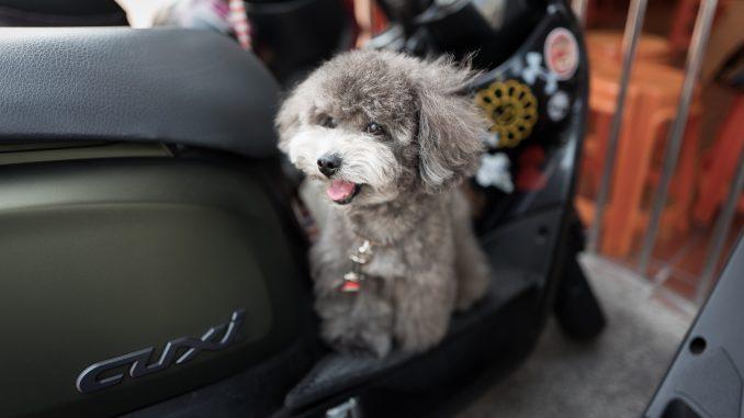 andrew shiau PqiOXMaz1D0 unsplash 678x381 - Sikker kørsel med kæledyr i din bil