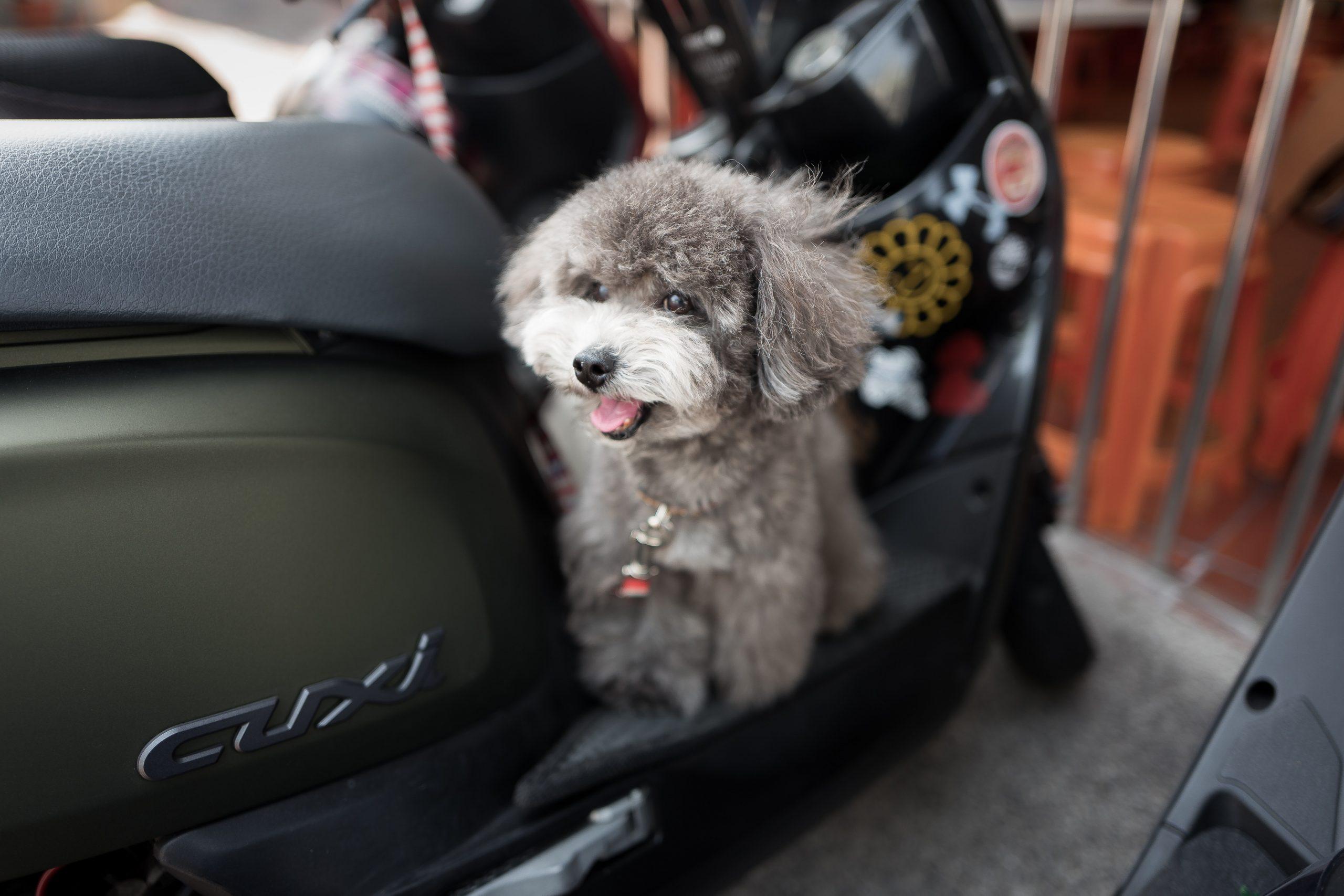 Sikker kørsel med kæledyr i din bil