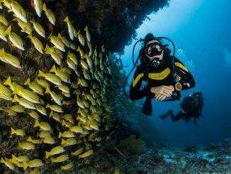 sebastian pena lambarri 7i5HMCGupVw unsplash 326x245 - Find våddragter til dit næste dykkereventyr